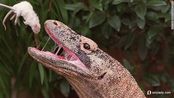 世界上最丑的10种动物