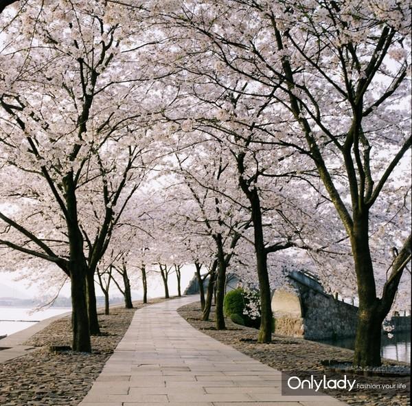 """青岛中山公园:做一个真正""""花痴"""""""