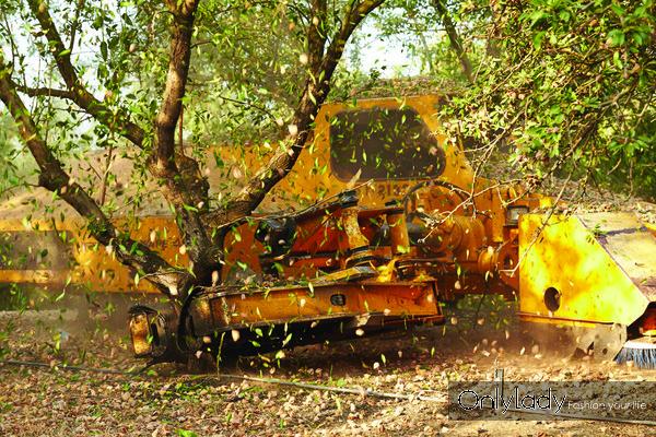 巴旦木的收获3