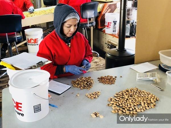 巴旦木机器与人工筛选 挑出不好的果实 (2)