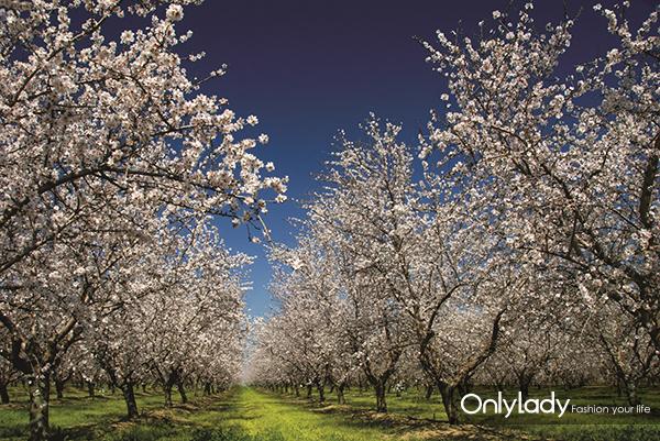 2:加州富饶的土壤和适宜的气候温度,孕育了富含多重营养的加州巴旦木
