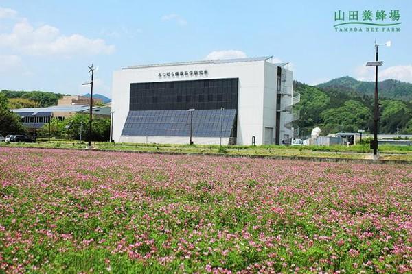 蜂富生活,山田养蜂场