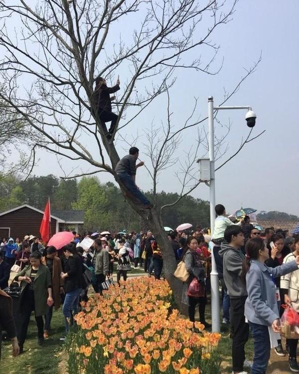 杨钰莹农村走穴捞金,身材发福惨变大妈,大叔爬树上争堵芳容