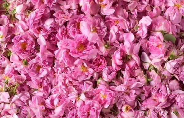 当Celebeau玫满绽放,遇见玫瑰花开时刻