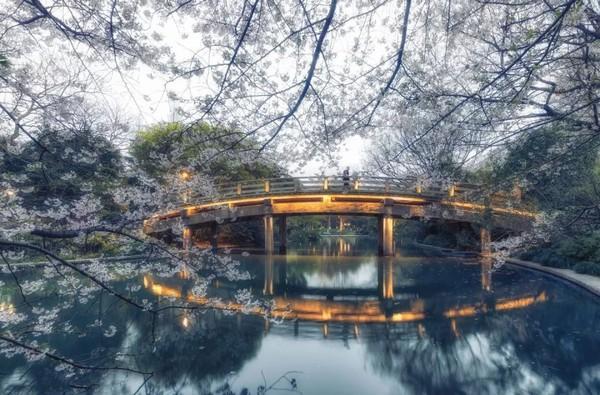 沪杭出发3h赏花地图,随便一处花海就能值回整个春天的票价