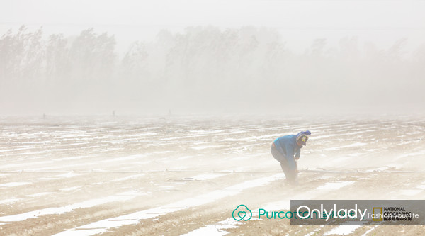 作品《棉田·风沙·人》,摄影师抓住新疆塔克拉玛干沙漠春季常出现的大风、沙尘天气,记录下棉苗扎根荒漠、与人一起抗击沙暴的顽强姿态