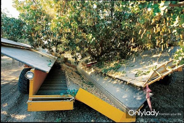 【加州开心果新闻稿件】秉承自然之选 加州开心果亮相中国坚果炒货食品展 2