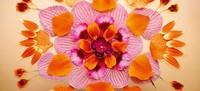 宝格丽香氛之花颜花语