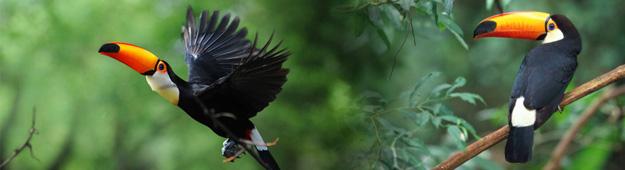 在南美洲生活的珍稀动物