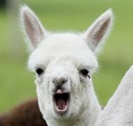 困意十足的动物表情秀 动物表情秀