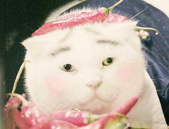 别理被曝床照的渣男田源 来看给猫画眉的美妞田原