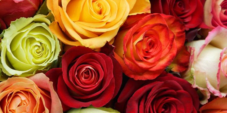 6种玫瑰颜色 找出你的恋爱基因