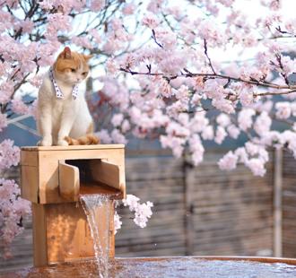 不追樱花,都对不起这个春天!
