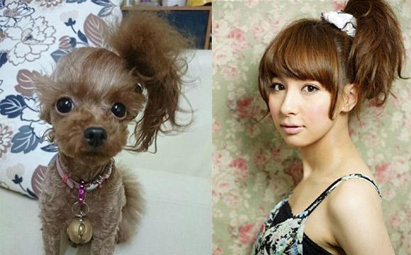泰迪狗狗夏天发型_泰迪狗狗夏天造型